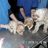 Illegal dogs rescued